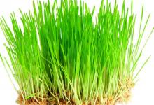 «Зимнее травяное чудо»