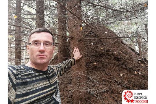 Самый высокий муравейник в России