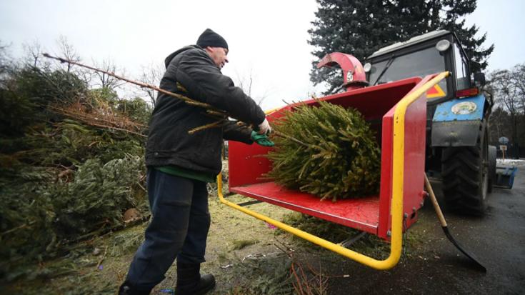 В Татарстане появились пункты приёма новогодних ёлок
